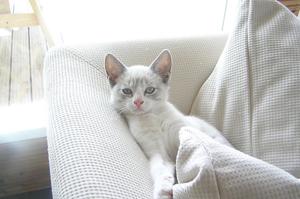 dream_gato